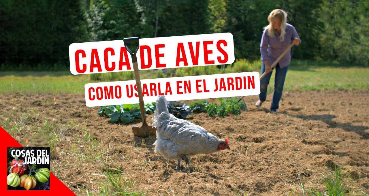 Sigue leyendo para obtener consejos sobre cómo compostar excrementos de aves y cuáles son las ventajas de utilizarlo #huerto #huerta #huertourbano #jardineria #jardin #cultivar
