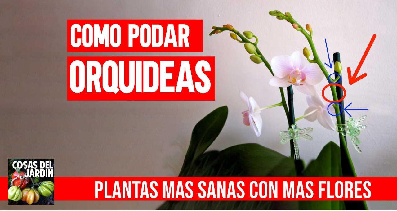 Si bien son bastante fáciles de cuidar, debes tener mucho cuidado al podar las orquídeas. Sigue estos pasos para podarlas adecuadamente y tener más flores. #jardineria #jardin #huerto #huertourbano #cultivar