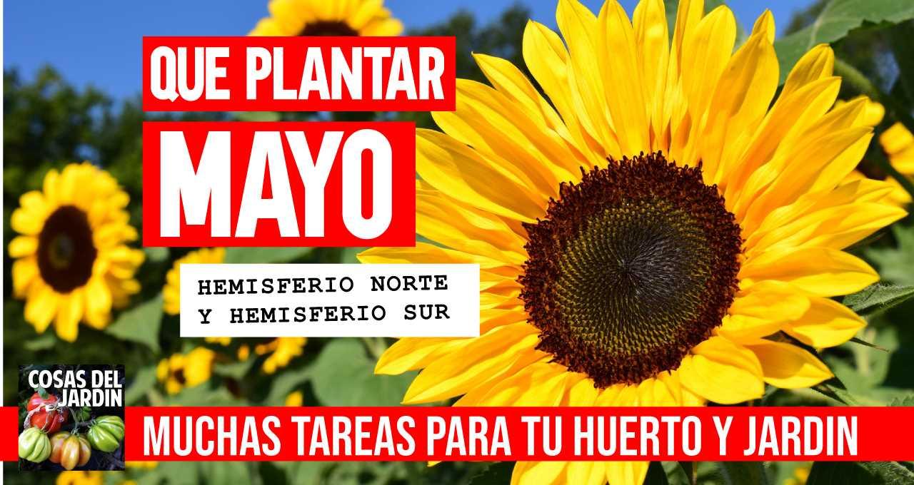 Cuales son las tareas que se pueden hacer y los cultivos que se pueden sembrar en el mes de Abril, tanto en el hemisferio Norte como en el Sur`#jardin #jardineria #huerto #huerta #huertourbano #cultivar