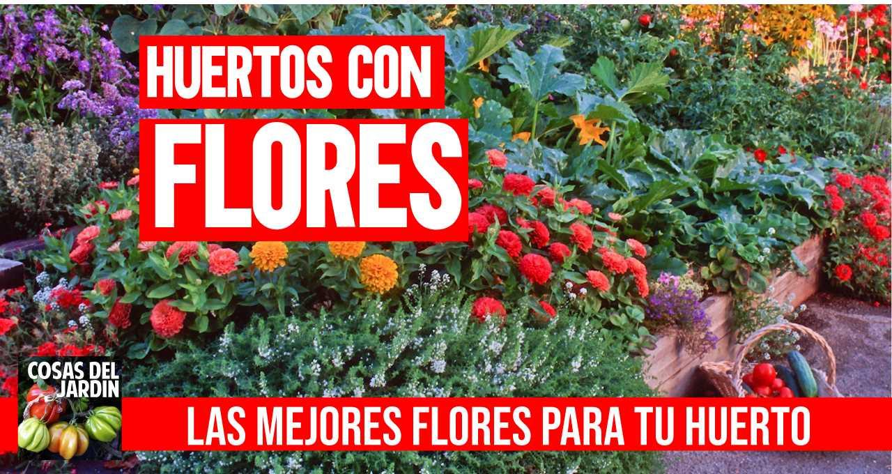 Considera incorporar plantas y hierbas con flores. Las flores atraen polinizadores, y también atraen insectos depredadores de las plagas del huerto. #huerto #huerta #huertourbano #jardin #jardineria #cultivar