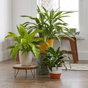 Plantas de Interior de Poca Luz. 18 Plantas de bajo mantenimiento - 13