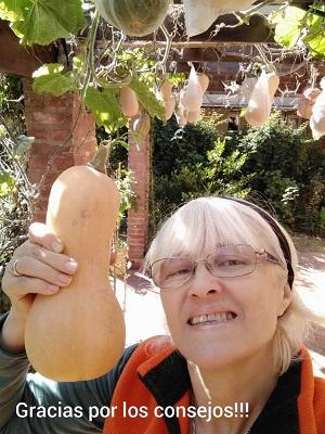 Cómo armar una pérgola para que tus calabazas crezcan hacia arriba #huerto #huerta #jardin #jardineria #cultivar