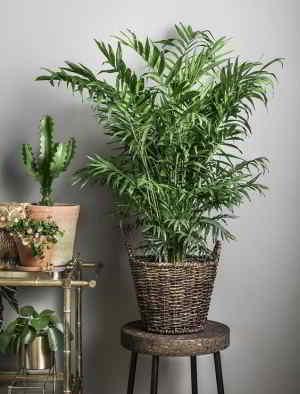 Plantas de Interior de Poca Luz. 18 Plantas de bajo mantenimiento - 4