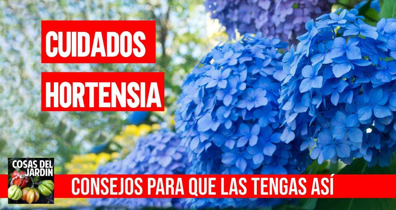 variedades de hortensias Una guía supercompleta donde encontrarás todo lo que necesitas para tener unas hortensias como las de la foto. Plantado, Riego, poda, cambiar el color y más #jardin #jardineria #hortensia #cultivar