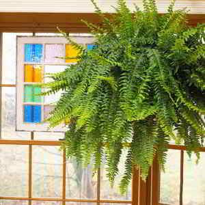 Plantas de Interior de Poca Luz. 18 Plantas de bajo mantenimiento - 5