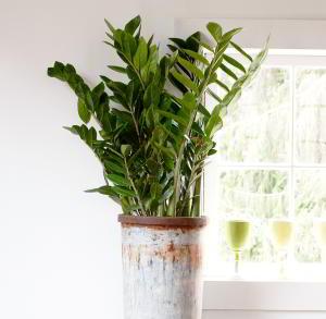 Plantas de Interior de Poca Luz. 18 Plantas de bajo mantenimiento - 3