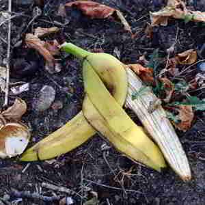La cascara de banana es un excelente Abono casero para plantas Te dejo una selección de los mejores abonos caseros para plantas para experimentar #huerto #huertourbano #jardin #jardineria #cultivar