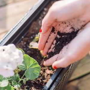 El café usado es un excelente Abono casero para plantas Te dejo una selección de los mejores abonos caseros para plantas para experimentar #huerto #huertourbano #jardin #jardineria #cultivar