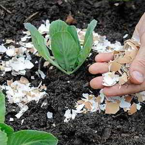 la cáscara de huevo es un excelente Abono casero para plantas Te dejo una selección de los mejores abonos caseros para plantas para experimentar #huerto #huertourbano #jardin #jardineria #cultivar