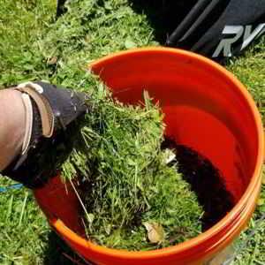 los cortes de cesped es un excelente Abono casero para plantas Te dejo una selección de los mejores abonos caseros para plantas para experimentar #huerto #huertourbano #jardin #jardineria #cultivar