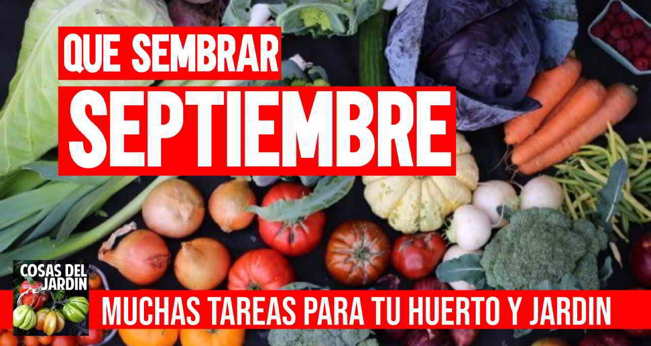 Que sembrar en Septiembre 2020 + Tareas Huerto y Jardin
