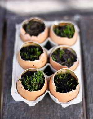 cascara de huevo para las plantas