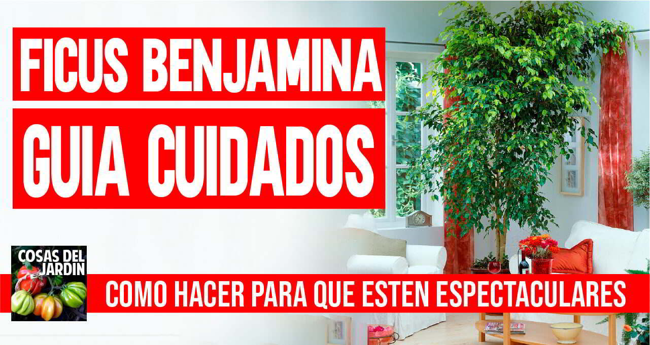 Cuidados del Ficus Benjamina – Guía Completa