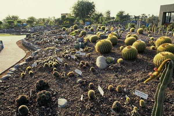 Cactus mammillaria habitat