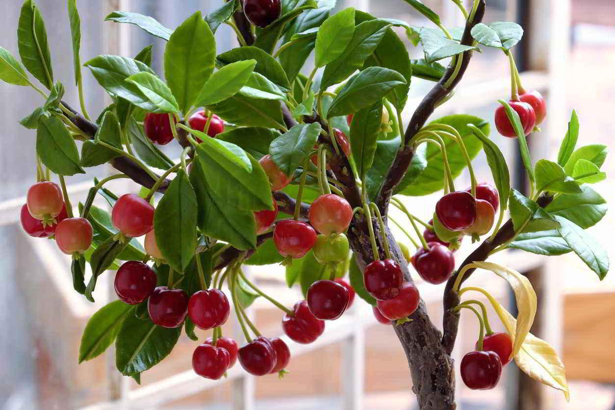 10 mejores Arboles Frutales en Maceta que puedes cultivar