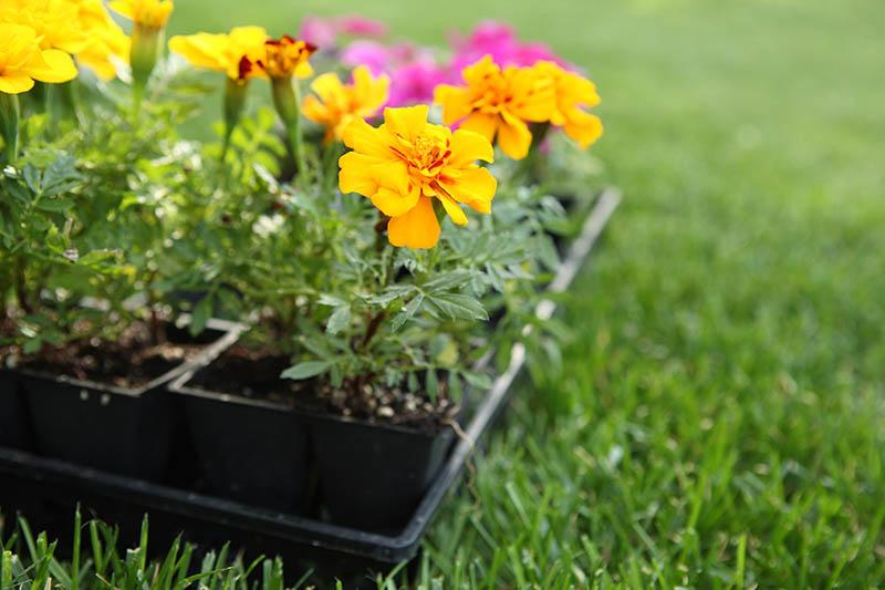Como hacer trasplante de plantas correctamente - 8