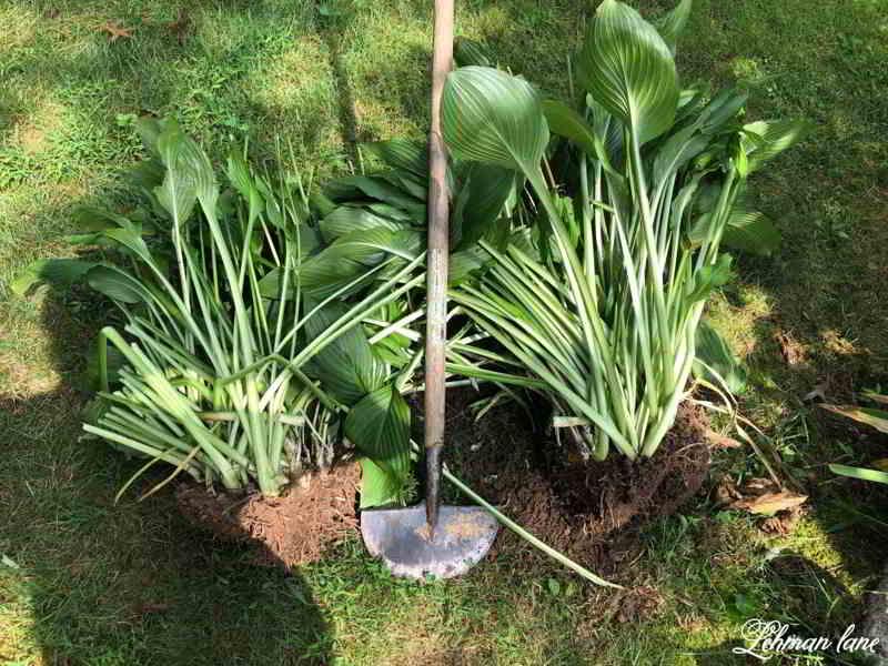 Como hacer trasplante de plantas correctamente - 10