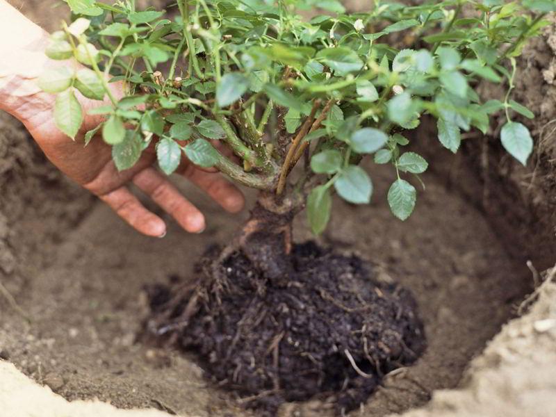 Como hacer trasplante de plantas correctamente - 11