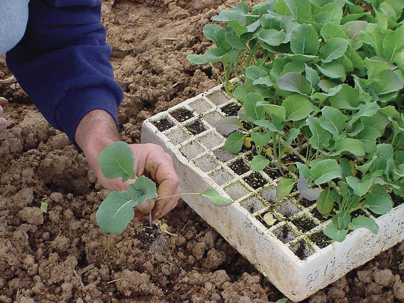 Como hacer trasplante de plantas correctamente - 9