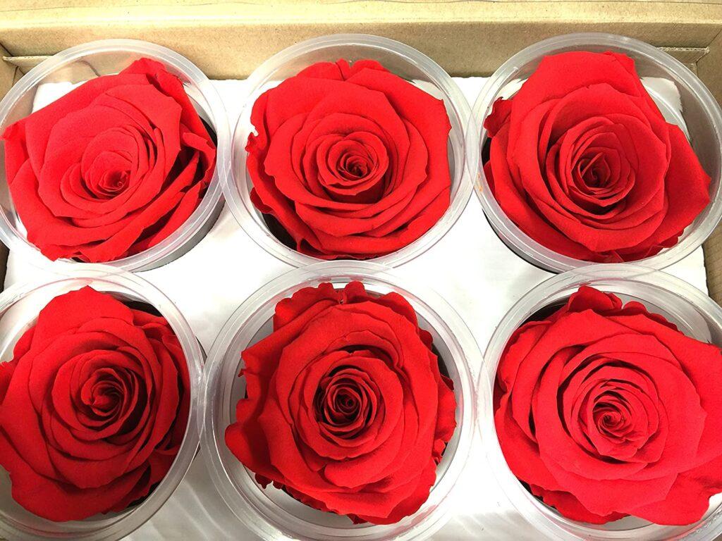 Flores preservadas por congelamiento