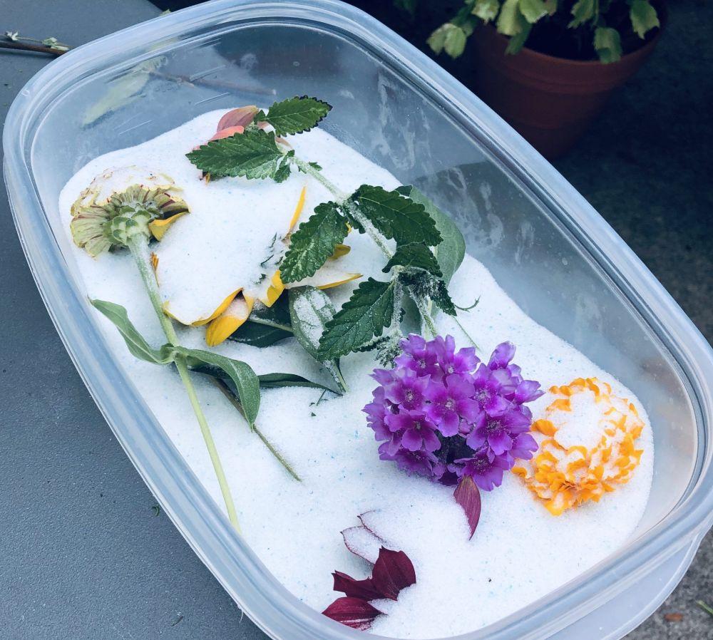 Gel de Silice preservacion de flores
