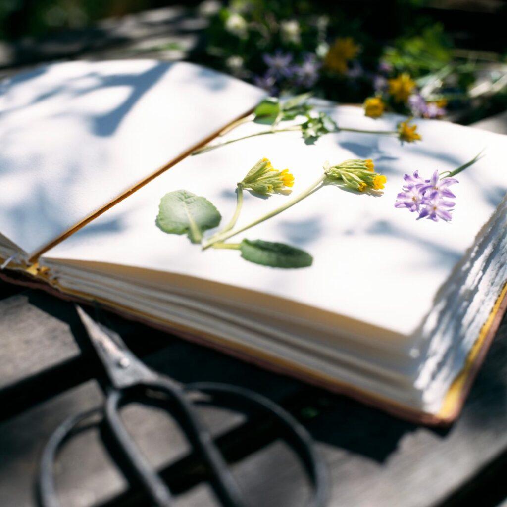 prensado preservacion de flores