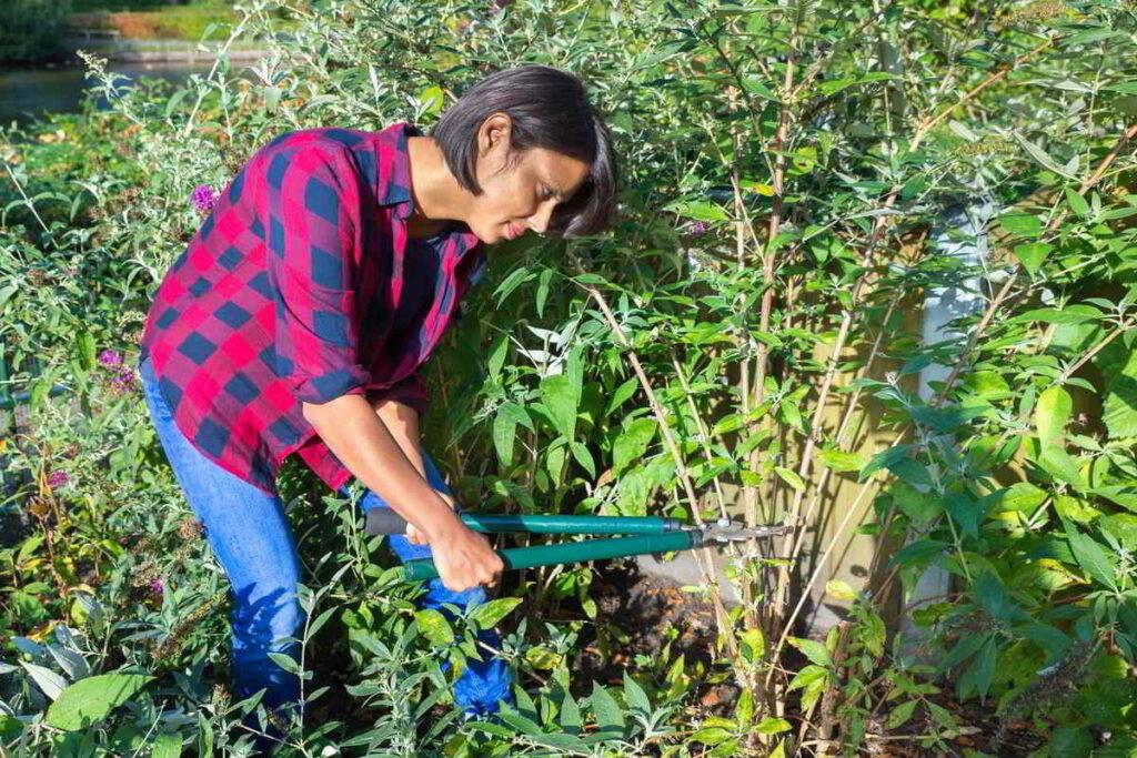 12 Herramientas de Jardinería Esenciales para principiantes - 3